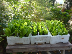seedlings2